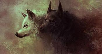 18627-black-and-white-wolves