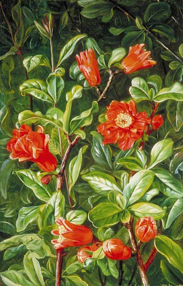 Λουλούδια ροδιού - Marianne North - 1875