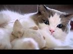 مرض القطط والعقم لدى السيدات