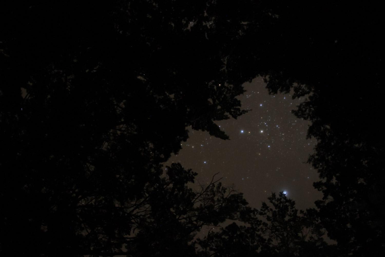 Ciel étoilé à travers les arbres