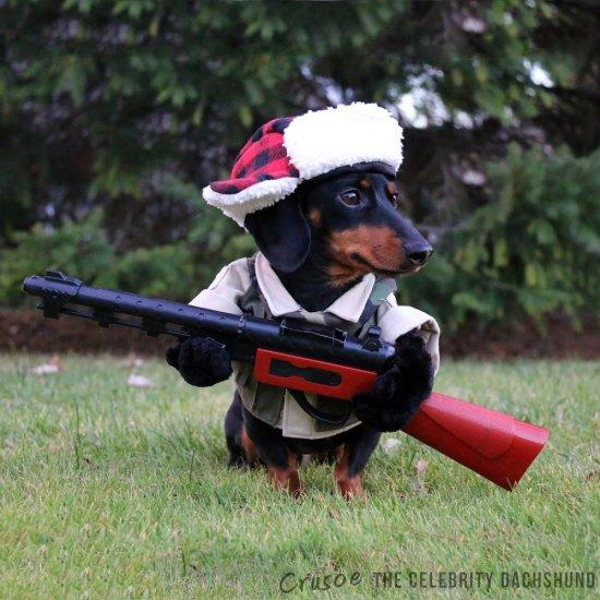 """""""Я — идеальный охотник"""" и другие костюмы для собак"""