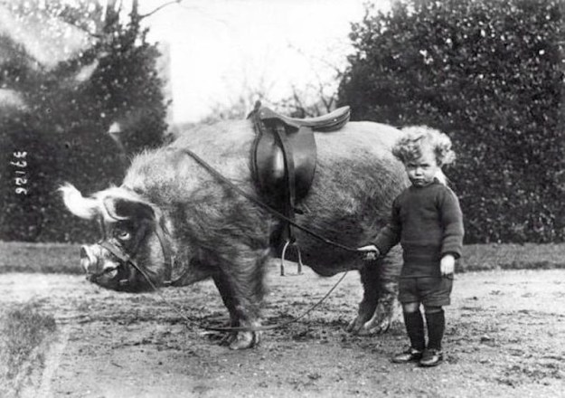 Мальчик и его транспорт. США, начало XX века