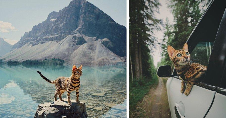 Этот кот живет интереснее, чем ты! 20 фото из путешествий