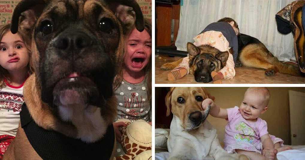 Нелегкая жизнь домашних животных с детьми