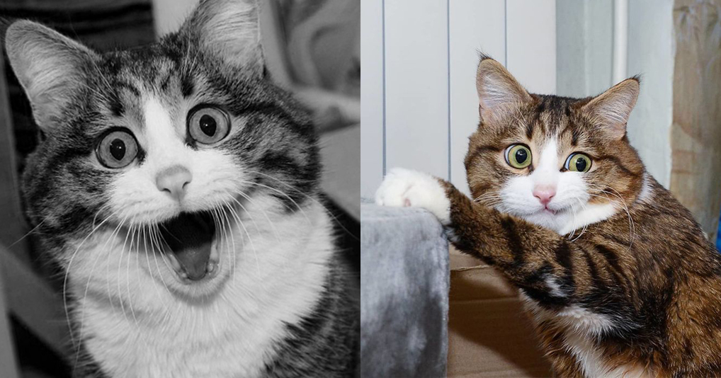 Кот Рекси завоевывает Интернет благодаря своей невероятной мимике!