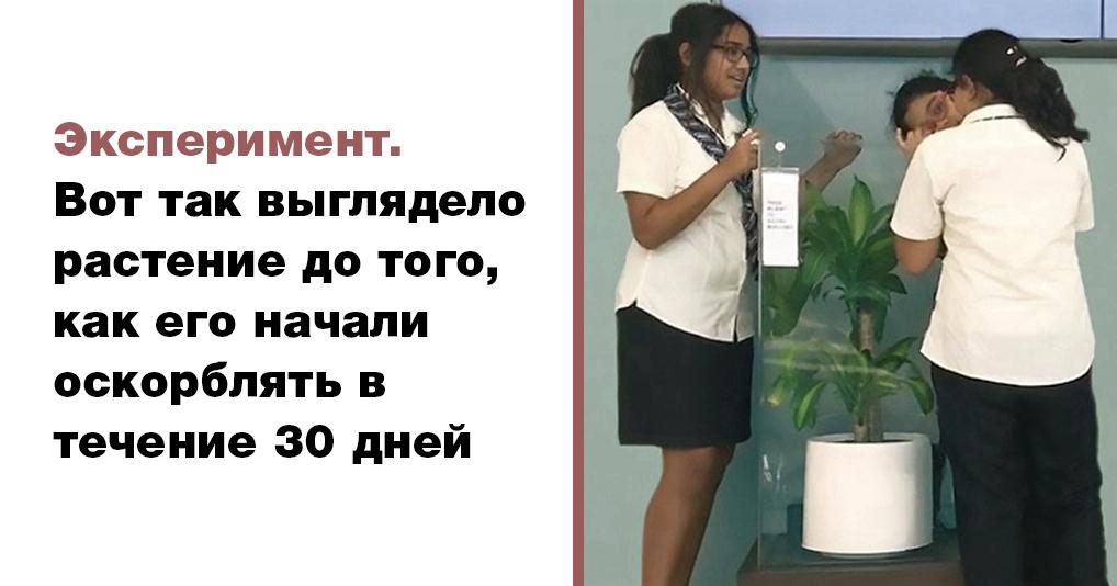 ИКЕА попросила учеников оскорблять растение в течении 30 дней