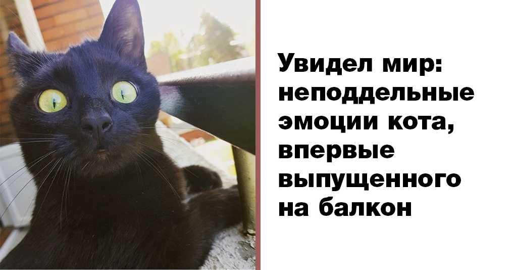 Кота впервые выпустили погулять на балкон: непередаваемые эмоции!