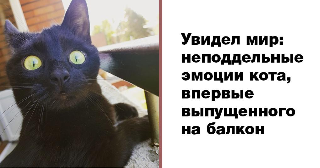 Кота впервые выпустили погулять на балкон. Его эмоции не передать словами!