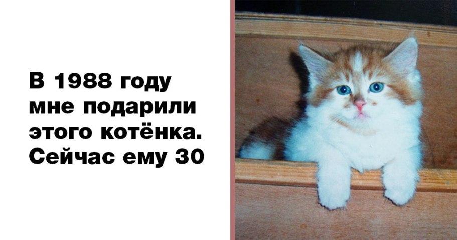 Самый старый кот на земле отметил свой юбилей