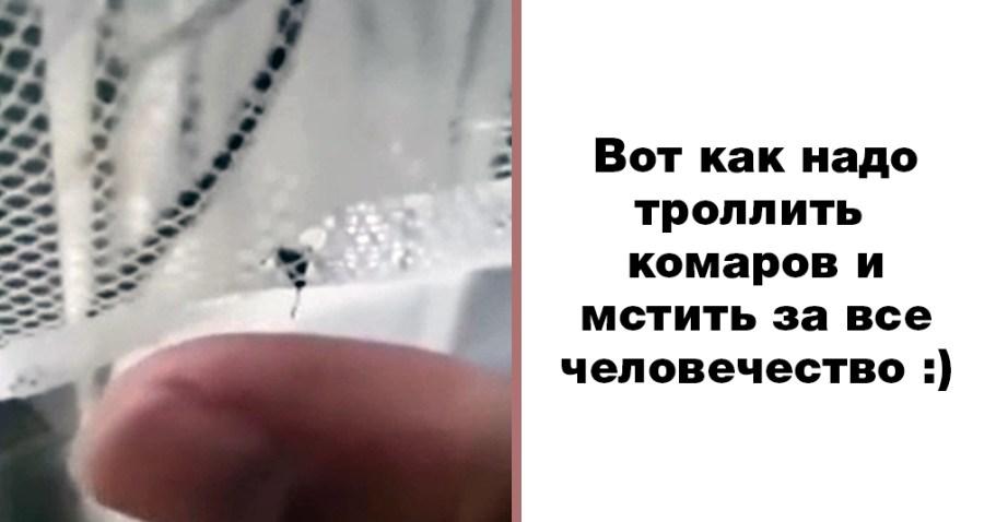 Изощренный троллинг комара! Вот она, месть за все человечество!