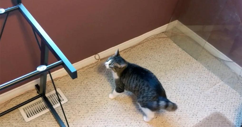 Сломанная котоматрица: хозяин устроил коту разрыв шаблона