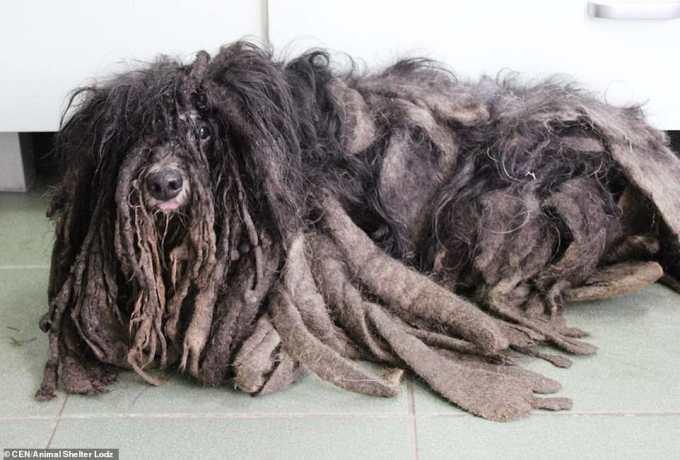 Польские зоозащитники нашли странное лохматое существо. Вы только посмотрите сейчас на эту милую мордочку
