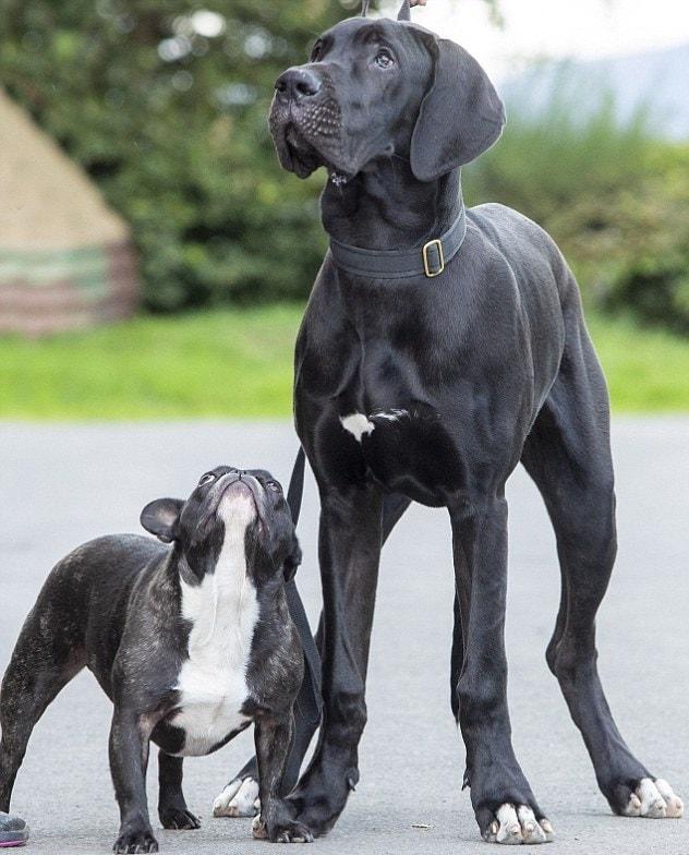 5-месячный щенок Арни, размеры которого впечатляют уже сейчас