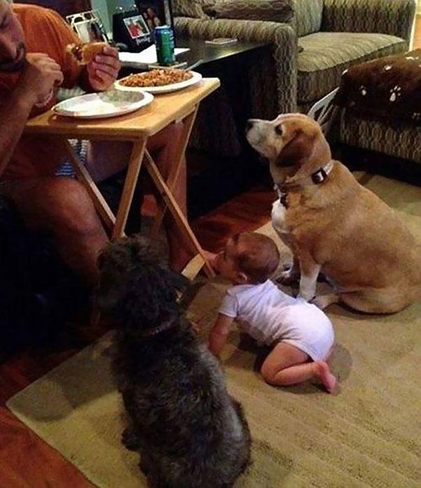 Эти собачки готовые на все, чтобы уталить свой голод