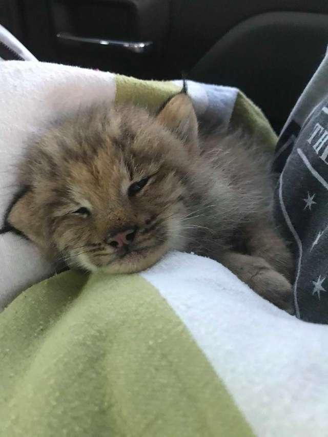 Парень решил спасти найденного на улице котенка, но тот оказался с сюрпризом