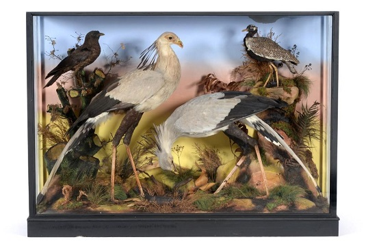 One of the antique taxidermy dioramas in the Yorkshire sale