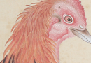 Imperial Collection chicken