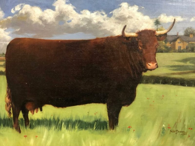 one of the prized pair of Devon Red Cattle estimated at £300-500 going under the Charterhouse hammer in their January picture auction
