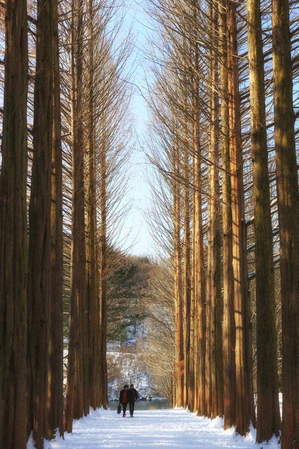 Nami Island Winter : island, winter, Island, Winter, Sonata, Seeing
