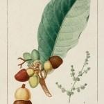 Fruits, Herbs, Medicinal, Spices, Vegetables