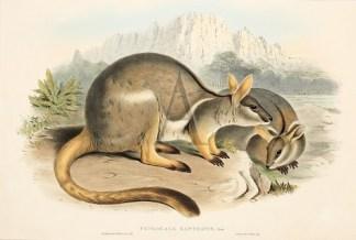 Mammals - John Gould