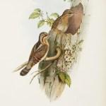 John Gould - Birds of Great Britain