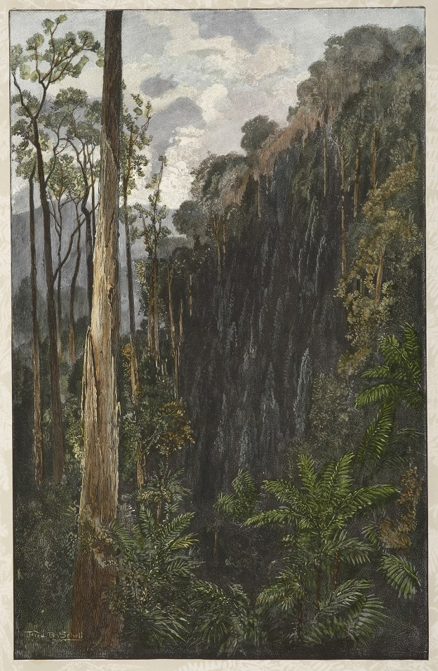 A Sassafras Gully on the Black Spur. - Antique Print from 1886