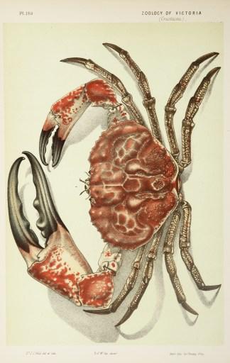 Crustaceans - McCoy's Zoology