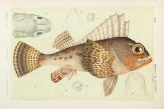 Fish - McCoy's Zoology
