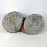Pair of Dinosaur Eggs