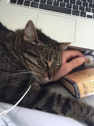Tabby cat asleep on a woman's arm