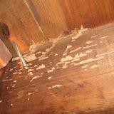 5 Tips dan Trik jauhkan rayap dari perabotanmu