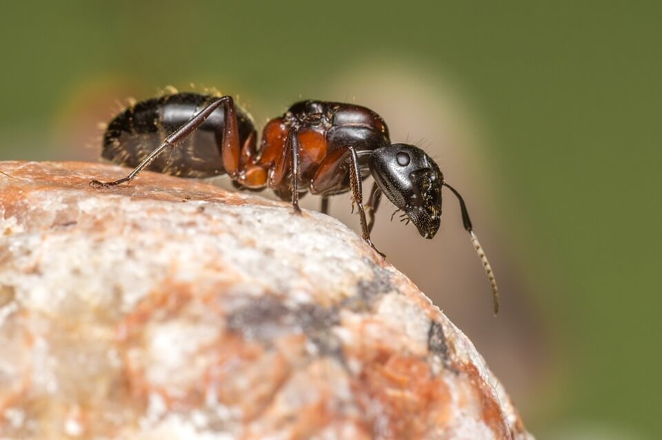 2.-Bagaimana-Mencegah-Semut-Masuk-Rumah_3.jpg