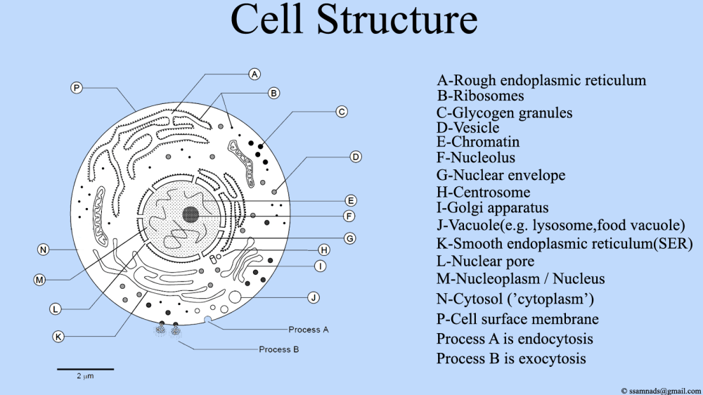 medium resolution of back to the basics the not so simple cell antisense science rh antisensescienceblog wordpress com cell structure and function cell structure and function