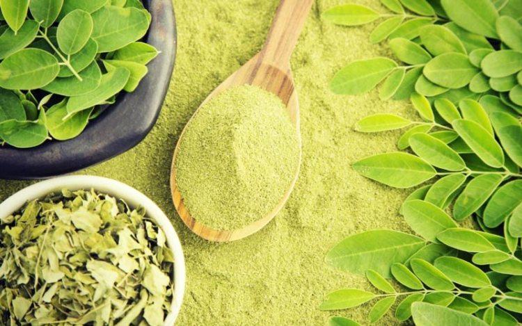 Tout savoir sur le moringa et ses vertus antibiotiques