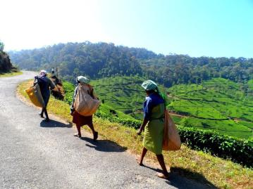 From the tea fields of India, Ayla (@MrsAylaAdvnture) of the UK photographed these women working hard--barefoot. Routine there, but certainly not in the UK! pic.twitter.com/wunXmyfCmp