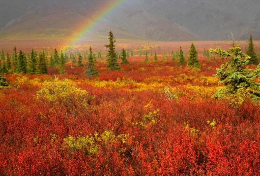 Bhadri Kubendran (@bhadrikubendran) of India showcased this incredibly colored rainbow's end in Alaska's Denali in Autumn: 500px.com/photo/56039612