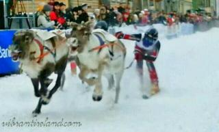 Susan (@VibrantIreland) of Ireland let us in on the Sami festival in Norway, which features reindeer dragging along...alpine skiers: pic.twitter.com/nkNi4TLTKj