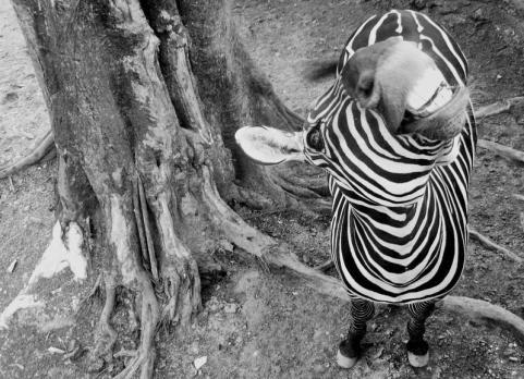 Tara (@TaraLowryPhoto) got a unique expression--and angle--with this beautiful zebra mug: http://www.taralowryphotography.com/Photography/FRONT-PAGE/n-D5Jd9/i-5RTSn29/A