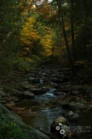 A New York stream in the fall