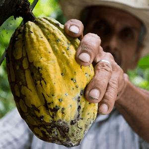 lening van microkrediet wordt niet altijd voor duurzame producten gebruikt