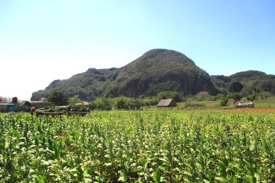 Valle de Viñales: Beautiful and peaceful!