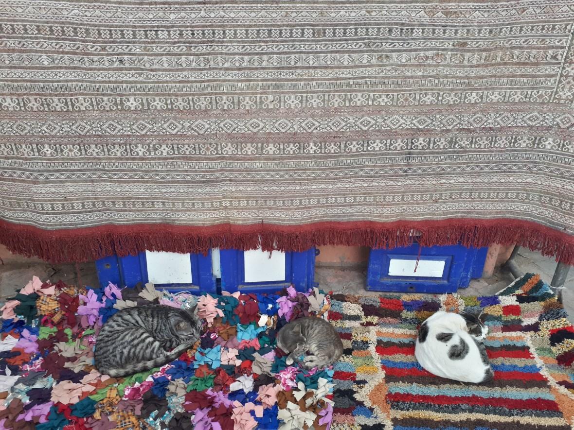 Carpet cats