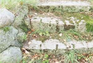 Stentrappa