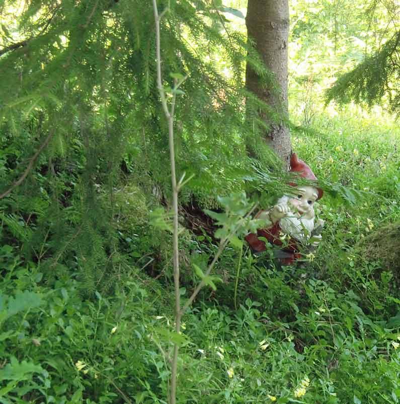 tomten-i-skogen