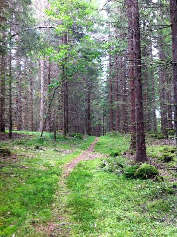 Stig i skogen