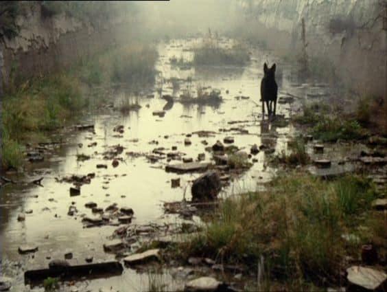"Photo of سينماتوغراف لفيلم "" المطارد "" للمخرج أندرى تاركوفسكى"