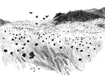 Wheat field , book illustration