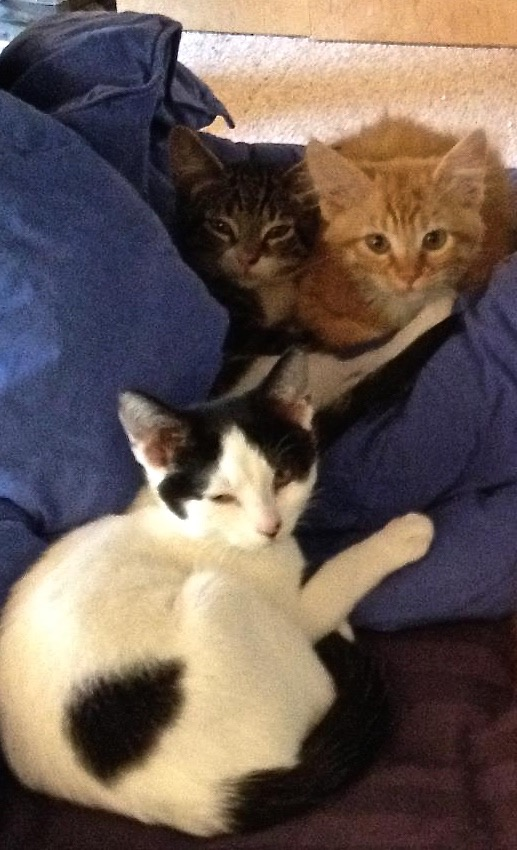 Harry is the grey tabby to the left of George (orange tabby) and both hide from the fearsome Katniss.