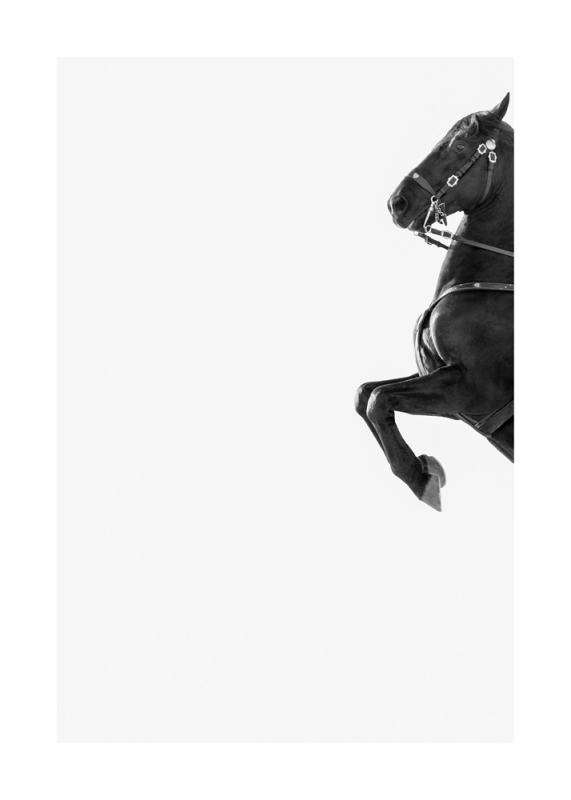 Menorquin Horse: #001